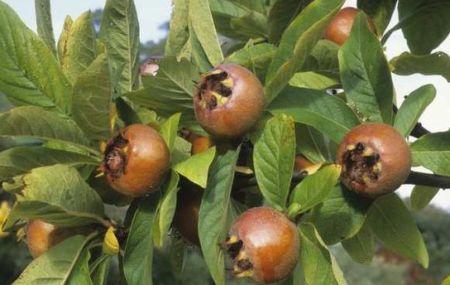 Травы и плоды, понижающие давление. Крым, юг России и Украины, Северный Кавказ