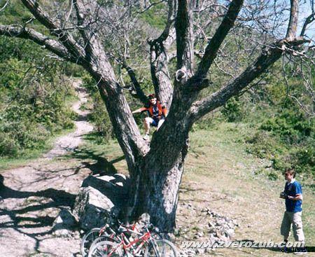 Никулинский орех у Долины Привидений горного массива Северный Демирджи