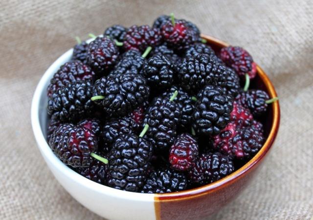 ягоды обычной черной шелковицы-самосевки