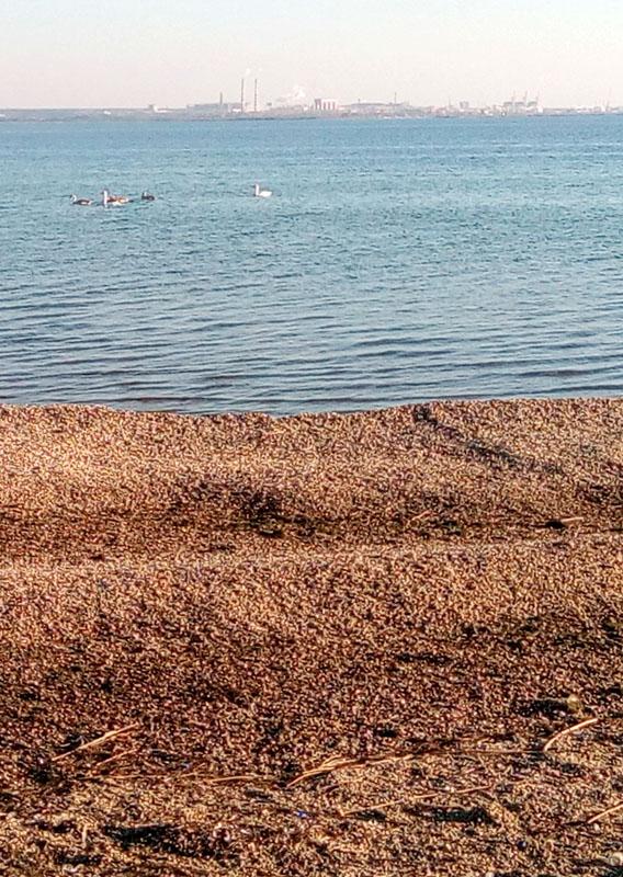 Балка Малая Дереклея, пляж, лебеди и дикие утки, Бугский лиман и портовые сооружения Николаева