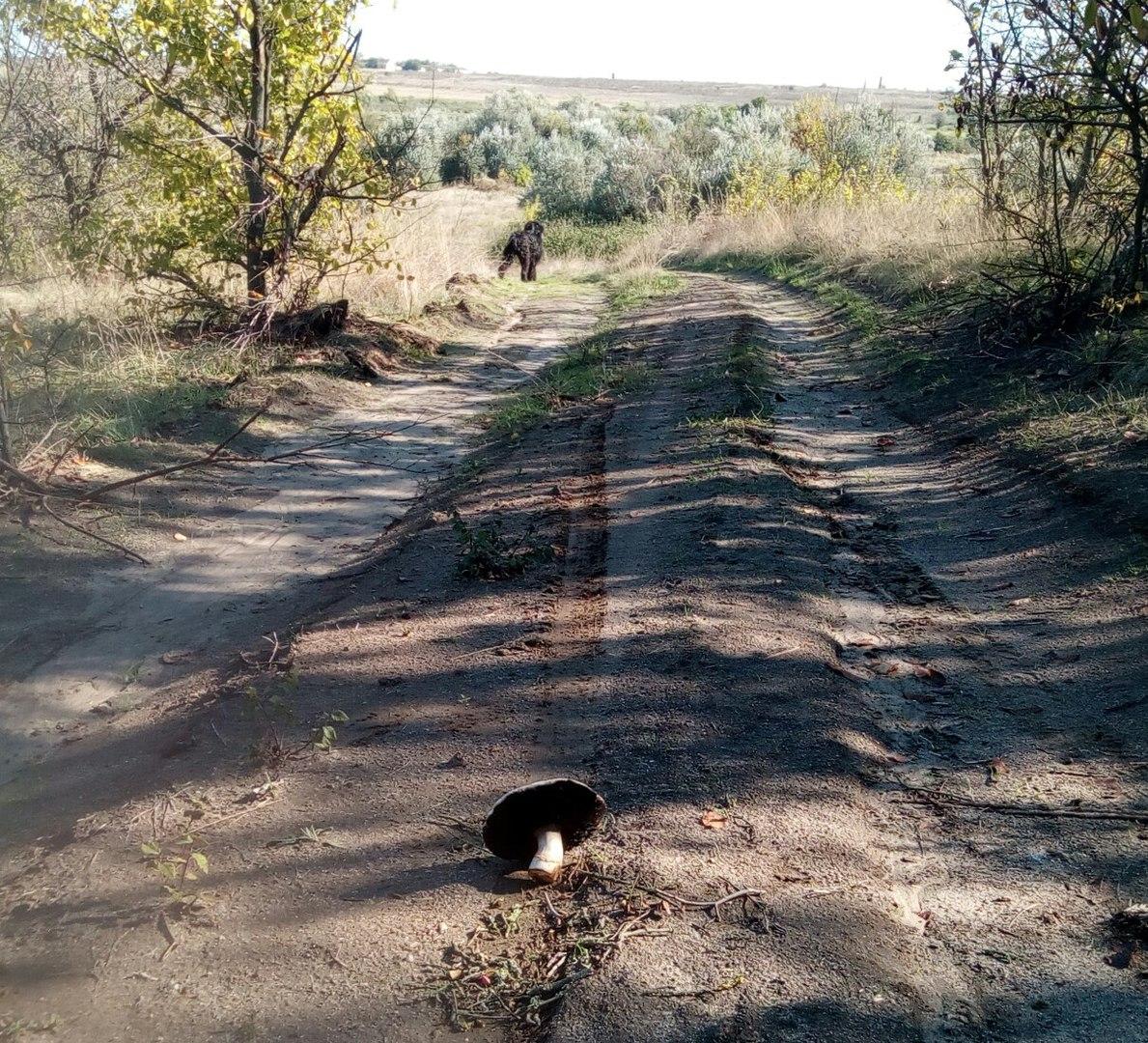 Старая-Богдановка-маршрут-прогулок-к-Турецкому-колодцу-вокруг-Дереклейской-балки-спуск-с-южного-борта