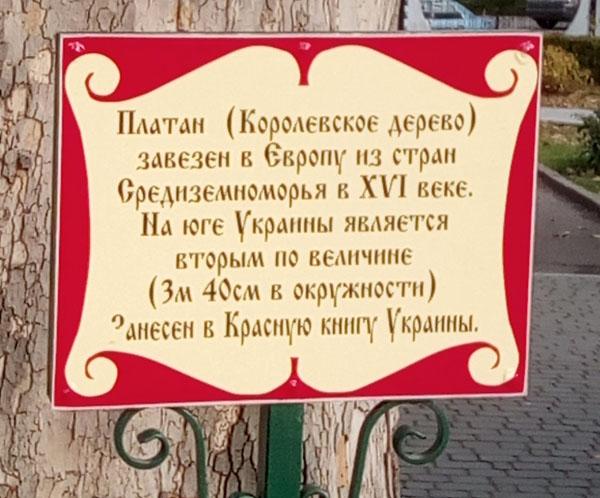 Николаев, старый платан в Детском игровом городке СКАЗКА