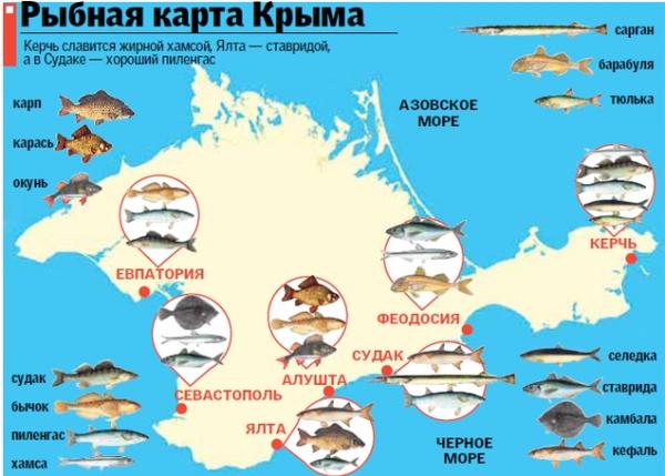Карта показывает какие ценные вкусные виды рыбы ловят у берегов Крыма. Черное, Азовское море, Сиваш и Керченский пролив.